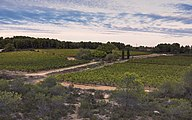 Landscape of vineyards, Castelnau-de-Guers cf02.jpg
