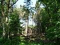 Landschaftsschutzgebiet Wiedebrocksheide Gesmold Melle Datei 11.jpg