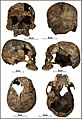 Lapa do Santo - Sepultamento 1 - Cranio.jpg