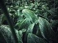 Larache Forest Plants 5.jpg