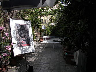 Largo di Torre Argentina cat shelter 4.jpg