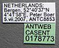 Lasius niger casent0178773 label 1.jpg