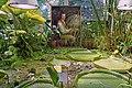 Le jardin botanique de Berne (Suisse) (42818062645).jpg