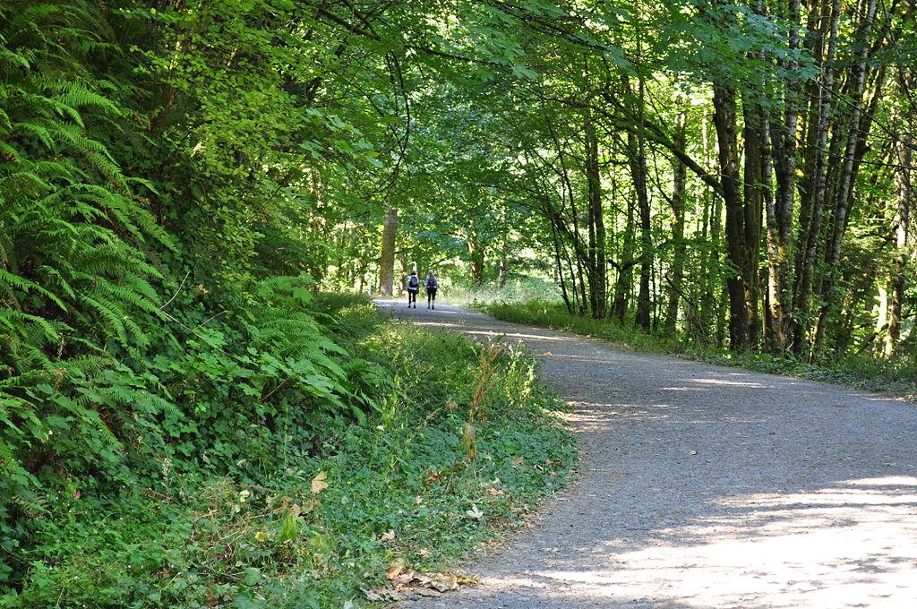Leif Erikson Drive, Forest Park, Portland Oregon 01