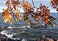 Leif Erikson Park, Duluth 10 25 17 -lakesuperior -leaves -fall -waves -rockyshore (37328352934).jpg