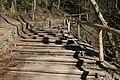 Leitenwälder der Isar 0663.jpg