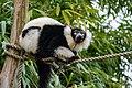 Lemur (26992483958).jpg