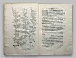 Leonhart Fuchs Historia Stirpium.jpg