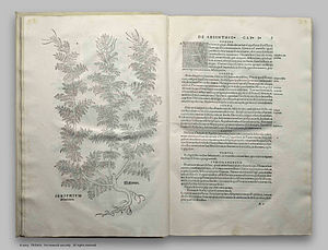 History of scientific method - Leonhart Fuchs' drawing of absinthe plant, De Historia Stirpium. Basle 1542