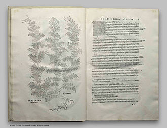 History of scientific method - Leonhart Fuchs' drawing of absinthe plant, De Historia Stirpium. Basle 1542