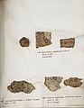 Lichenes Helvetici IX X 1833 025.jpg