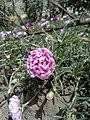 Light Red rose flower.jpg