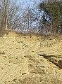Limestone Strata, Dudley, Worcestershire - geograph.org.uk - 637482.jpg