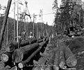 Loading crew on stacked logs at loading site, Goodyear Logging Company, near Clallam Bay, ca 1920 (KINSEY 2063).jpeg