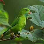 Green parrot with darker wings and orange beak