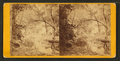 Lumber being moved through forest, Sioux City, Iow, from Robert N. Dennis collection of stereoscopic views.png