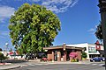 Lynden, Washington - Heritage Tree (Black Walnut) and Chamber of Commerce - Visitor Center.jpg