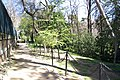 MADRID A.V.U. JARDIN DEL CAMPO DEL MORO - panoramio - Concepcion AMAT ORTA… (1).jpg