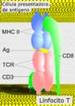 MHCII-TCR-CD8-es.png