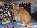 MTP Cat Show 2230060.JPG