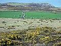 Maes-y-mynydd (1) - geograph.org.uk - 1262497.jpg