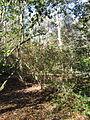 Magnolia Plantation and Gardens - Charleston, South Carolina (8556557506).jpg