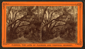 Magnolia grove, near the city of St. Augustine, Florida, from Robert N. Dennis collection of stereoscopic views.png