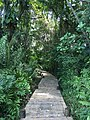 Maison de la mangrove, Les Abymes, Guadeloupe.jpg
