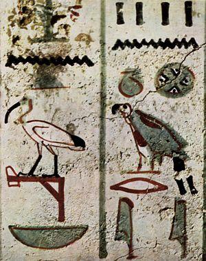 1805 in birding and ornithology - Sacred ibis hieroglyph