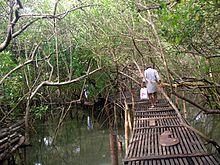 Mangroves park pappinisseri5.JPG