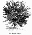 Manual of Gardening fig035.png