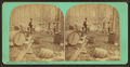 Maple sugar making. Boiling the sap, by Vermont Stereoscopic Company.png