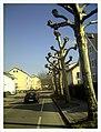 March Denzlingen - Master Season Rhine Valley Photography - panoramio (1).jpg