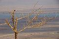 Masada 16299 (11819836686).jpg