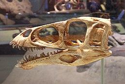 Rekonstrukce lebky masiakasaura