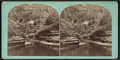 Matchless scene in Freer's Glen, Schuyler County, N. Y., from Robert N. Dennis collection of stereoscopic views.png