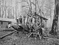 Men and women at the Schafer Brothers logging camp on the Satsop River at Juno, 1906 (INDOCC 1321).jpg