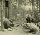 Meksiko grizzlies.png