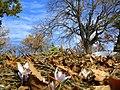 Mezarlıktan - panoramio.jpg