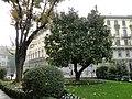 Milano - panoramio (69).jpg