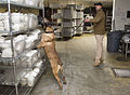 Military working dogs sniff out narcotics, explosives 150213-A-DZ999-312.jpg
