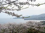 Minamata Cherry line.JPG