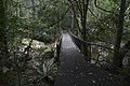 Minnamurra Rainforest - panoramio (5).jpg