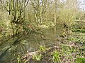 Moat in Whomerley Wood, Stevenage (8679487075).jpg