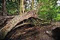 Money tree - geograph.org.uk - 1417865.jpg