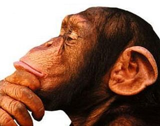 Theory of mind in animals