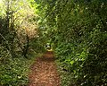Monxton -Footpath - geograph.org.uk - 572387.jpg
