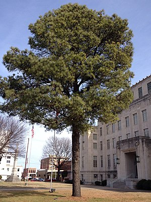 Moon tree - Moon Tree in front of Sebastian County Courthouse, in Fort Smith, Arkansas