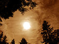 Moon Clouds Treetops.jpg