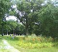Moonp Point Cemetery Streator IL USA.jpg